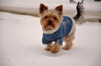 Fázós kutya