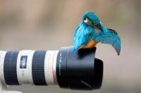 Természetfotózás
